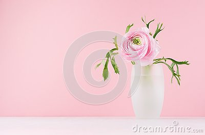Valentine day background - gentle pink flower buttercup with green leaves in elegant vase on soft light white wood board.