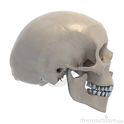 607cd4600800f Human skull 3d illustration