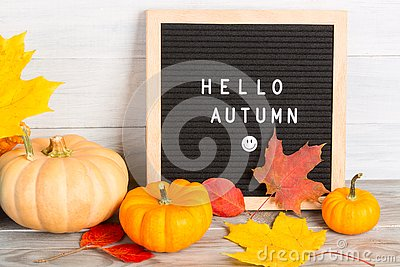 Autumn still life image with pumpkins, colorful maple foliage and letter board with words Hello Autumn against white wooden wall