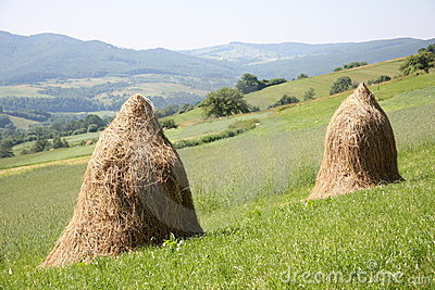Hay piles on the mountains field