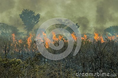 Fires in the Amazon forest - global climate change.