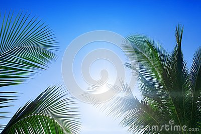 Green palm tree branches, bright blue sky, shiny sun beams background close up, palm leaves silhouette, sunlight glow, summer