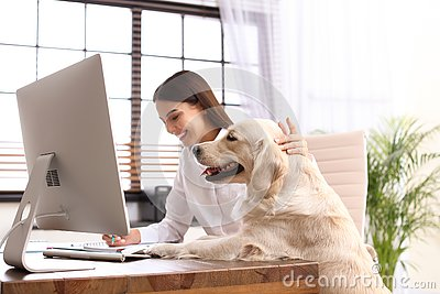 Young woman working at home office and stroking Golden Retriever dog