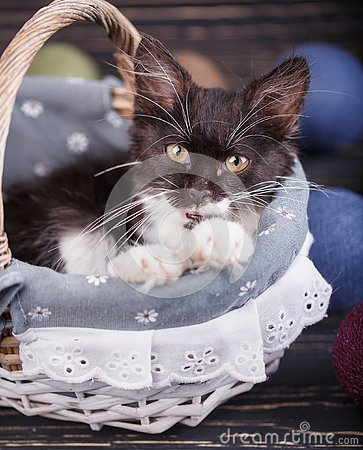 The cat is in the basket with his mouth open