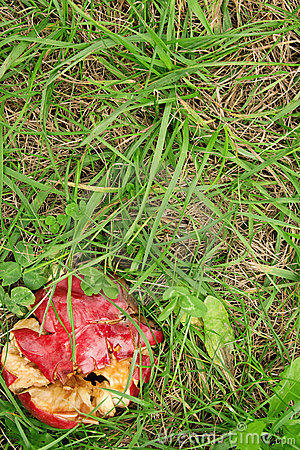 Crushed red apple in green grass