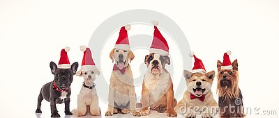 6 happy dogs celebrating christmas together