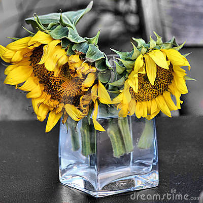 Two sunflowers in glass vase