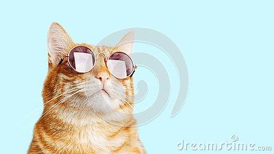 Closeup portrait of funny ginger cat wearing sunglasses isolated on light cyan.