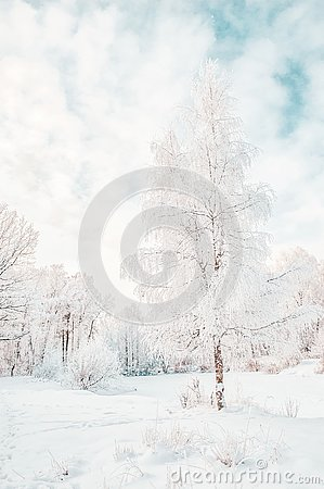 Beautiful winter Christmas landscape path leading to snow-covered trees at dawn. Seasonal features of winter