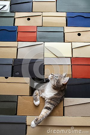 Cat crawled into a pile of stacked shoe boxes, calmly lies pulling paws and curiously looks up with copy space