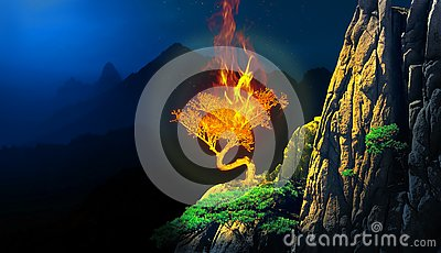 Burning bush plant in a cliff of a mountain