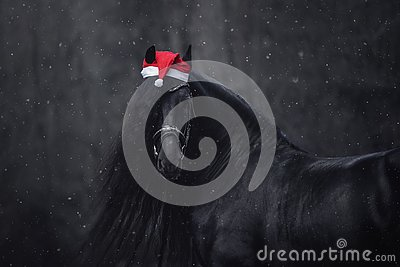 Christmas friesian horse with long mane in red cap in forest during snowfall