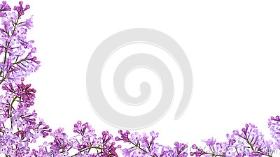 Purple lilac flower frame isolated on white background