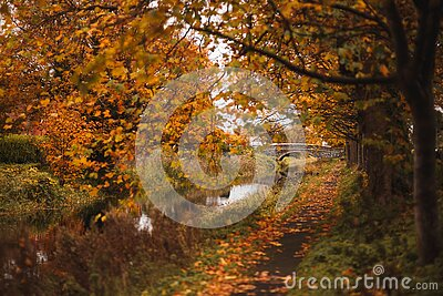 Path the river with autumn colors and yellow trees