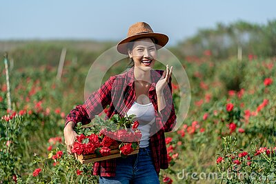Asian Farmers woman holding the rose bush in Rose Garden