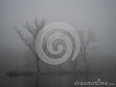 Pond in winter in a foggy forest