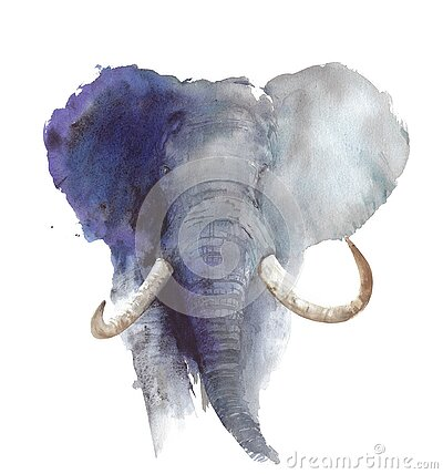 Elephant head portrait African wildlife endangered specie safari animal watercolor painting illustration isolated on white backgro