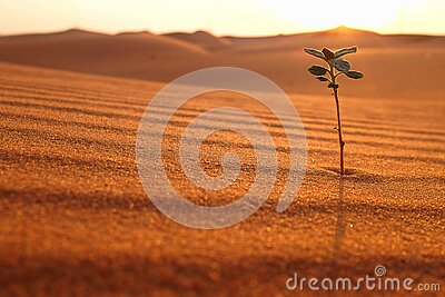 A lonely plant growing on a dry desert land at sunrise. Rebirth, hope, new life beginnings and spring season concept.