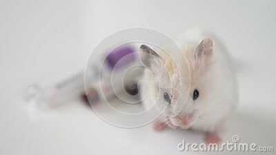Scientists test lab rat, mouse with syringe. Scientist and lab rat Back ground. Coronavrius test tubes. Covid-19 vaccine.