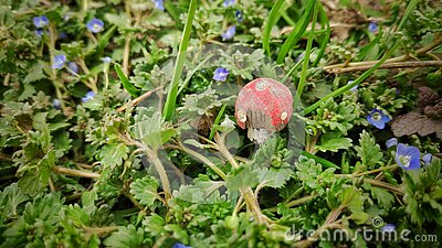 Close up shot of small wooden mushroom with red hat placed between small flowers and grass