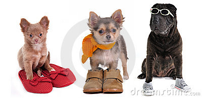 Three puppies with different footwear isolated