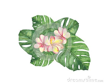 Watercolor hand painted nature tropical floral composition with green palm leaves and pink plumeria blossom flowers bouquet