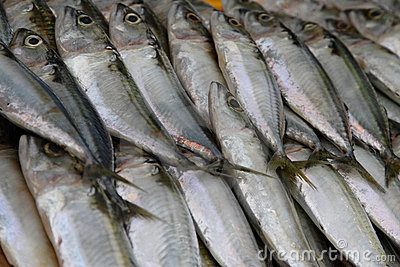 Mackerel Fish