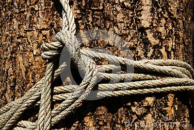 Old white rope tied around a big tree