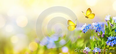 Beautiful summer or spring meadow with blue flowers of forget-me-nots and two flying butterflies. Wild nature landscape