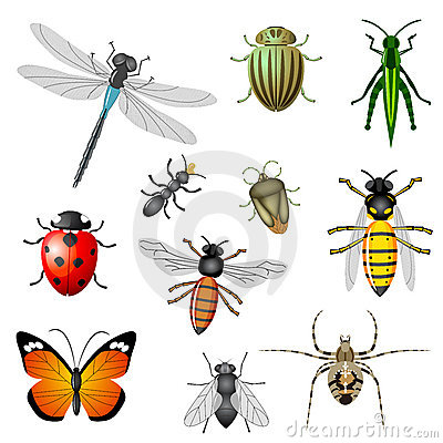 Insects and bugs