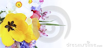 Spring flowers-yellow tulips, lilac chrysanthemums and white daffodils on a white background. Delicate flower arrangement.