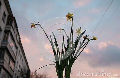 Pretty yellow flower at sunset light background