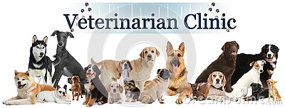 Collage with cute pets and text Veterinarian Clinic on white background. Banner design