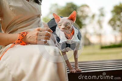 Girl and hairless cat in suit sit on bench in park, cat wear suit, summer sunset time