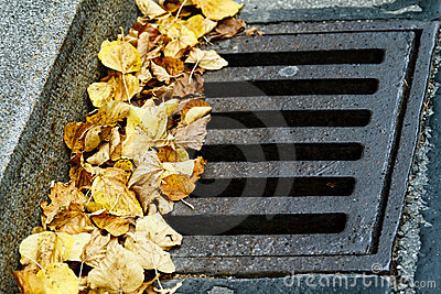 Leaves in the drain grate