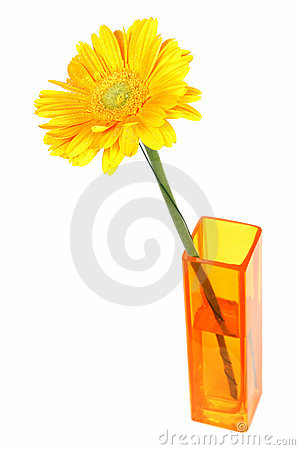 Yellow daisy flower in a vase