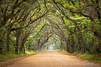 Botany Bay Spooky Dirt Road Creepy Oak Trees