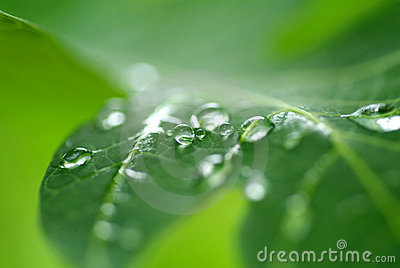 Water droplet on leave