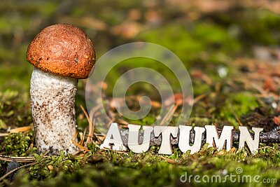 The word autumn, written in wooden letters on fallen needles in a natural forest, next to a mushroom. Selective focus