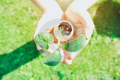 Child or person holding eggshell with germinated sprout - planting seedling vegetables or plants in used egg shell. Montessori