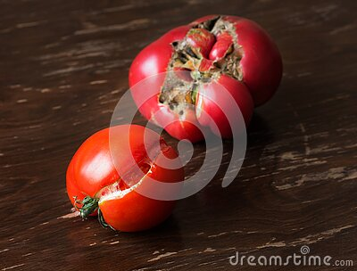 Two ripe ugly trendy tomatoes on a brown background. One tomato cracked