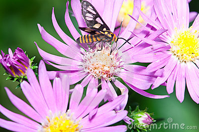 Nature Insect Pollination