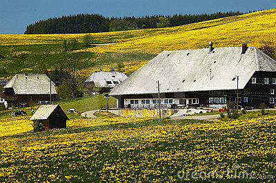 Black forest farmhouse in summer meadow