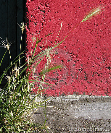 Wheat and Concrete