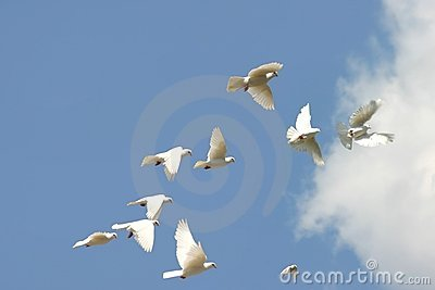 Flying doves