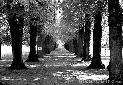 Road lined with trees