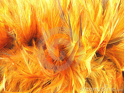 Feather Duster Background