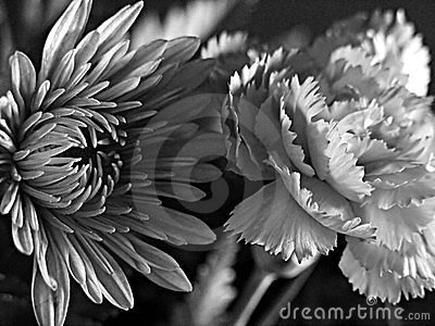 Fine Art Black and White Flowers
