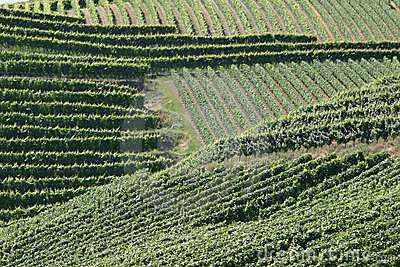 Vineyards stripes