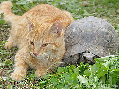 Friendly cat and turtle
